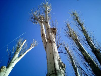 tree trimming and removal in arvada
