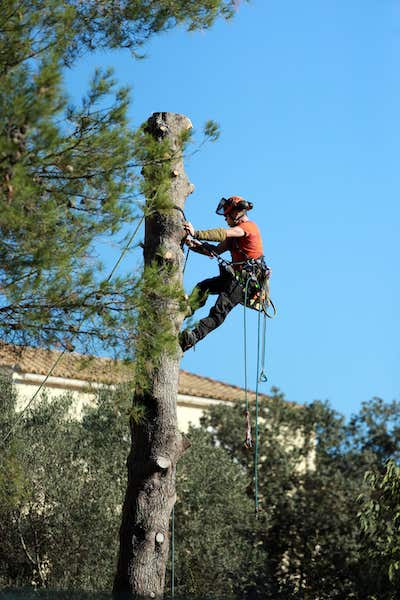 professional tree service in arvada